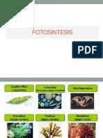 FOTOSINTESIS -