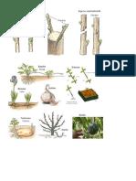 Reproducción Sasexual en Las Plantas