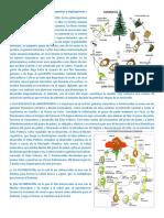 Ciclos de vida de las plantas gimnospermas y angiospermas.docx