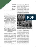 Las plantaciones de árboles no son bosques.pdf