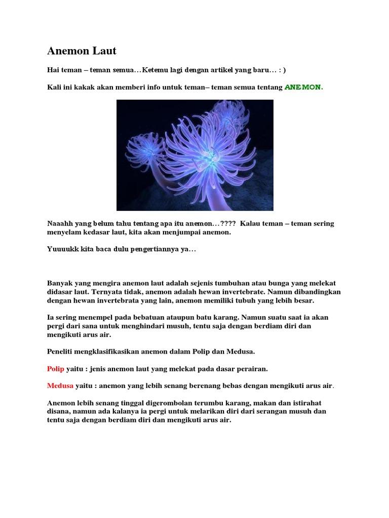 440 Gambar Hewan Anemon Laut Gratis Terbaru