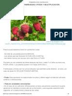 Frambuesas II Poda y Multiplicacion