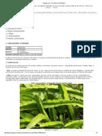 Pithaya cultivo