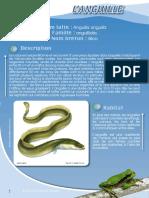 Anguille - Fiche péda Eau & Rivières de Bretagne