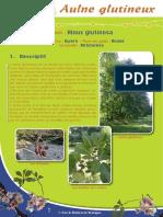 Aulne glutineux - Fiche péda Eau & Rivières de Bretagne