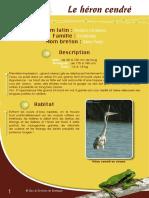Héron cendré - Fiche péda Eau & Rivières de Bretagne