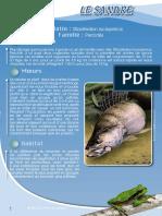 Sandre - Fiche péda Eau & Rivières de Bretagne