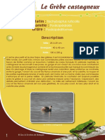 Grèbe castagneux - Fiche péda Eau & Rivières de Bretagne