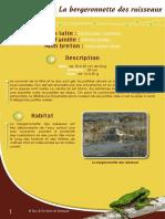 Bergeronnette des Ruisseaux - Fiche péda Eau & Rivières de Bretagne