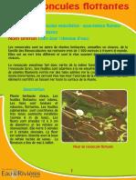 Renoncules flottantes - Fiche péda Eau & Rivières de Bretagne