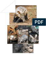Aardvark Facts
