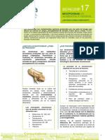 berezi 17 FINAL.pdf