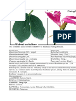 Orchid Tree Benefits 2beingfit