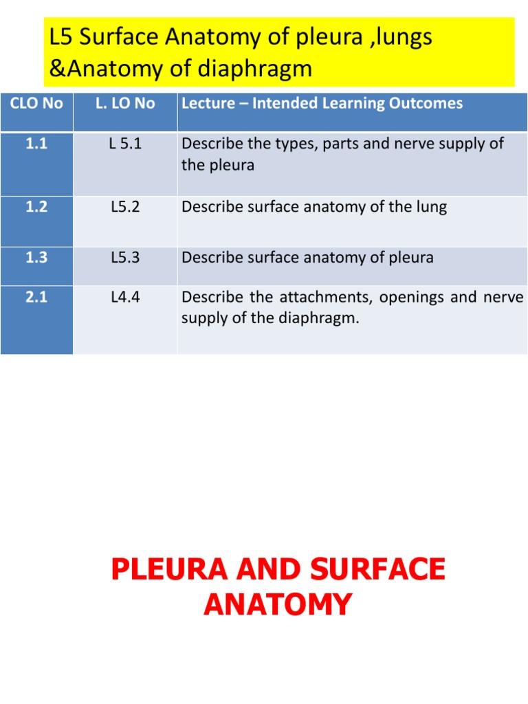 L5 Surface Anatomy & Diaphragm | Lung | Thorax (Human Anatomy)