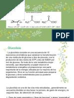 DIAPOSITIVAS DE GLUCOLISIS.pptx