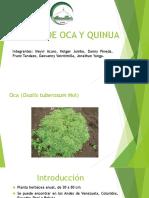 Presentación Oca.pptx