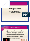 Integracion_metabolica