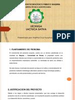 CULTIVO DE LECHUGA  - APURIMAC