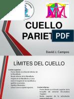 Cuello Parietal - 2da Clase