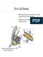 How Fish Breathe