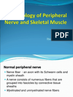 Pathology of Peripheral nerve and Skeletal Muscle - DA.ppt