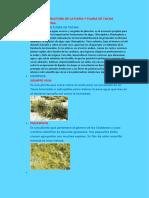 Flora y Fauna de Tacna 08-07 Mejorado