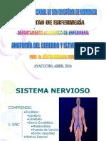 Anatomía Del Sistema Nervioso Central