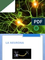 Completo Documento De neuronas