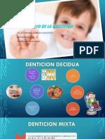 Desarrollo de La Dentición