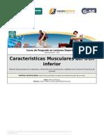 C-1 Caracteristicas Musculares Del Tren Inferior