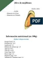 cultivo_de_mejillon_1 (4)