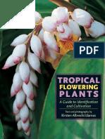 Tropical flowering plant