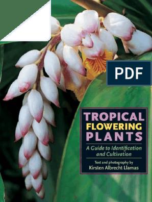"Azalea Hot Shot Variegata Plant in 3.5 /"" pot Azalea japonica Hot Shot Variegata"