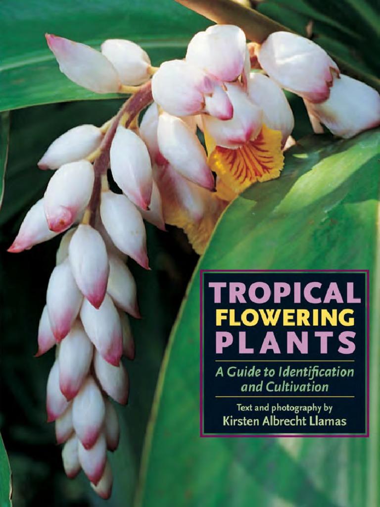 Blue Moraea Iris Bulbs Perennial Impressive Resistant Stunning Bonsai Flower Top
