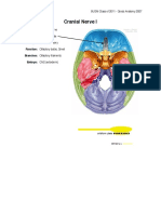cranial-nerves.pdf