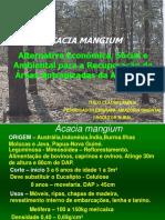 Palestra Acacia Mangium