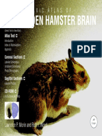 Atlas Hamster
