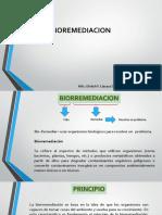 10. Biorremediación_2017