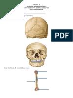 Sistema Esqueletico 2
