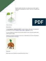 Función de la raíz.docx