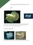 Spesis ikan laga.docx