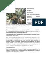 97561016-Plantas-Medicinales.docx