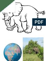 Imagenes de Elefante