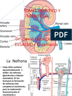 6. Clase Sindromes Nefrítico y Nefrótico
