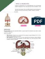 Tema 11 y 12 Diafragma y Musculos Del Abdomen