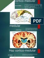 Haz córtico-medular.pptx