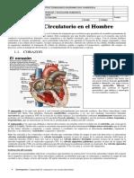 Guia Sistema Circulatorio en El Hombre