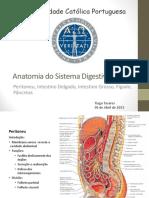 Anatomia do Sistema Digestivo.pdf