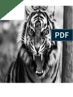 Pintura Tigre