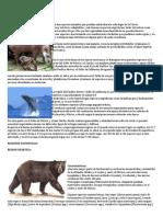 Fauna en Mexico